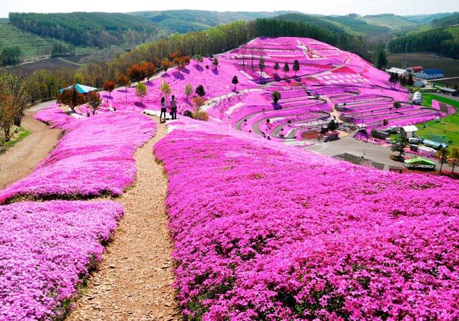 Cục xúc tiến du lịch Hokaido đưa kì quan ở Hokkaido đến gần hơn với du khách Việt - 3