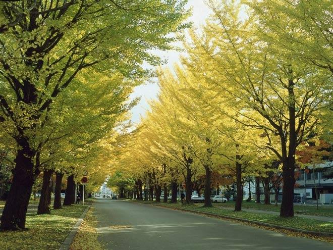 Cục xúc tiến du lịch Hokaido đưa kì quan ở Hokkaido đến gần hơn với du khách Việt - 5