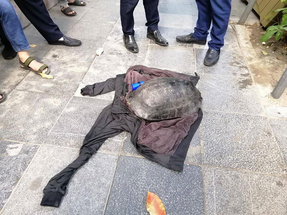 """Nóng 24h qua: Sau vụ bế rùa """"khủng"""" ở Hồ Gươm lên bờ, nam thạc sĩ bật khóc đoàn tụ người thân - 1"""