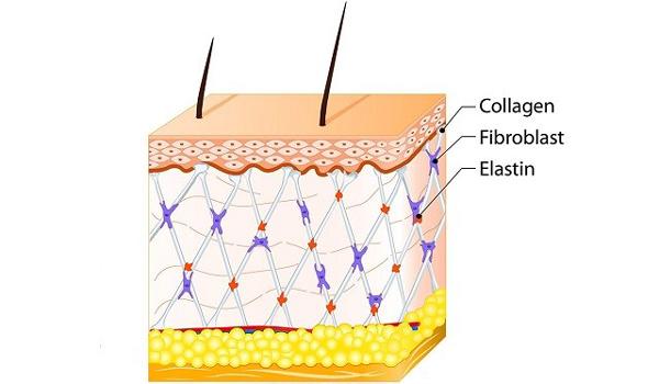 Collagen – yếu tố quyết định cho sự tươi trẻ của làn da - 1