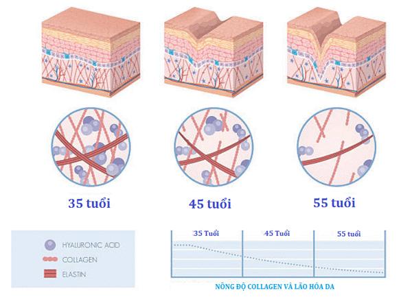 Collagen – yếu tố quyết định cho sự tươi trẻ của làn da - 3