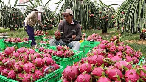 Xuất khẩu trái cây sang Trung Quốc dịp Tết cần lưu ý gì? - 1