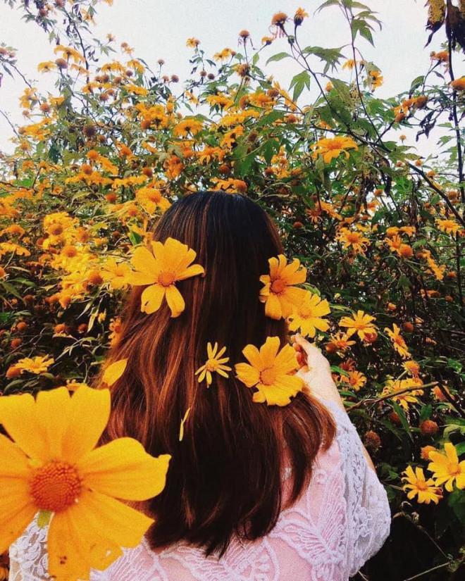 Team Hà Nội đâu cần đến Đà Lạt xa xôi, Ba Vì cũng sắp sửa bước vào mùa hoa dã quỳ rồi! - 3
