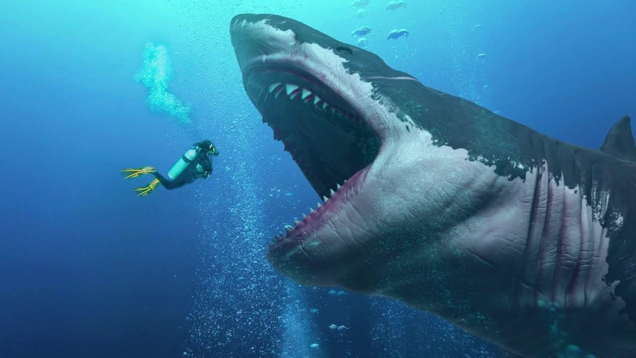 Rợn người cách để siêu cá mập Megalodon dài tới hơn 18 mét: Ăn thịt anh em từ trong bụng mẹ