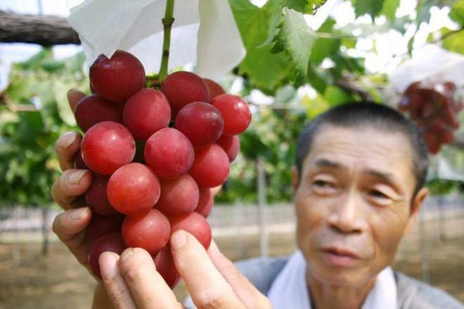9 nguyên tắc ăn uống giúp người Nhật sống thọ nhất thế giới - 8