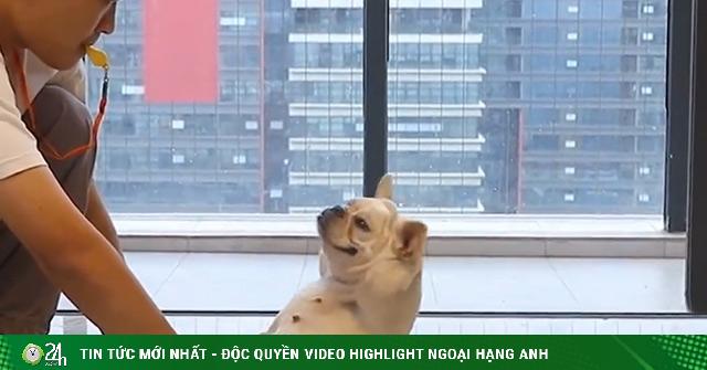 Chú chó bá đạo làm được mọi việc không khác gì con người