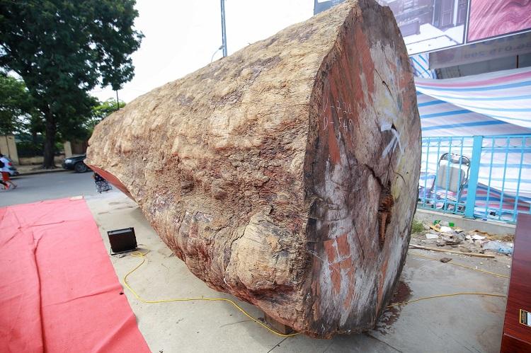 Ngỡ ngàng khúc gỗ cẩm lai nguyên sơ được rao bán 10 tỷ đồng ở Hà Nội - 2