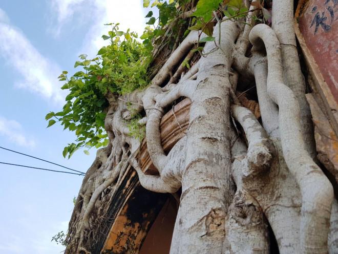 Ngôi đình 100 tuổi 'độc nhất vô nhị' ở miền Tây có 2 cây bồ đề mọc trên mái - 7