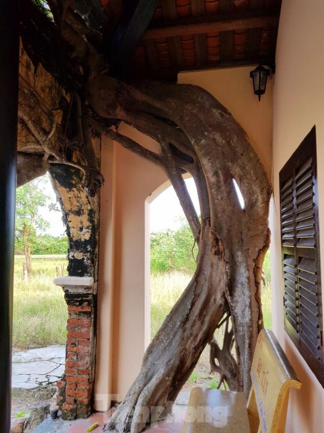 Ngôi đình 100 tuổi 'độc nhất vô nhị' ở miền Tây có 2 cây bồ đề mọc trên mái - 14