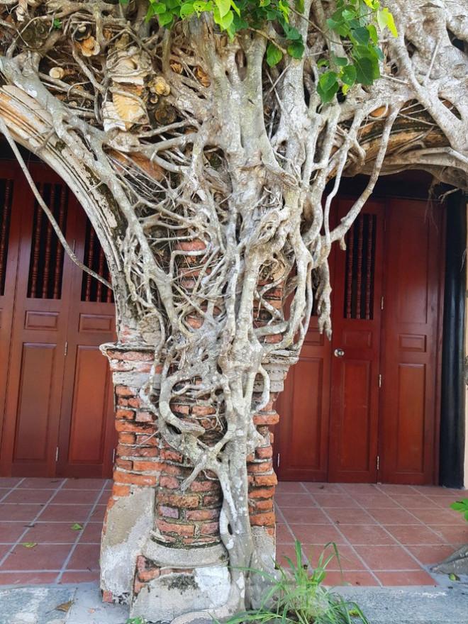Ngôi đình 100 tuổi 'độc nhất vô nhị' ở miền Tây có 2 cây bồ đề mọc trên mái - 13
