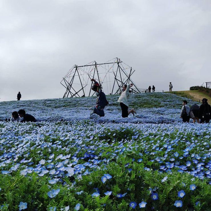Đến thăm Nhật Bản nhất định đừng bỏ qua những điểm đến này - hình ảnh 1