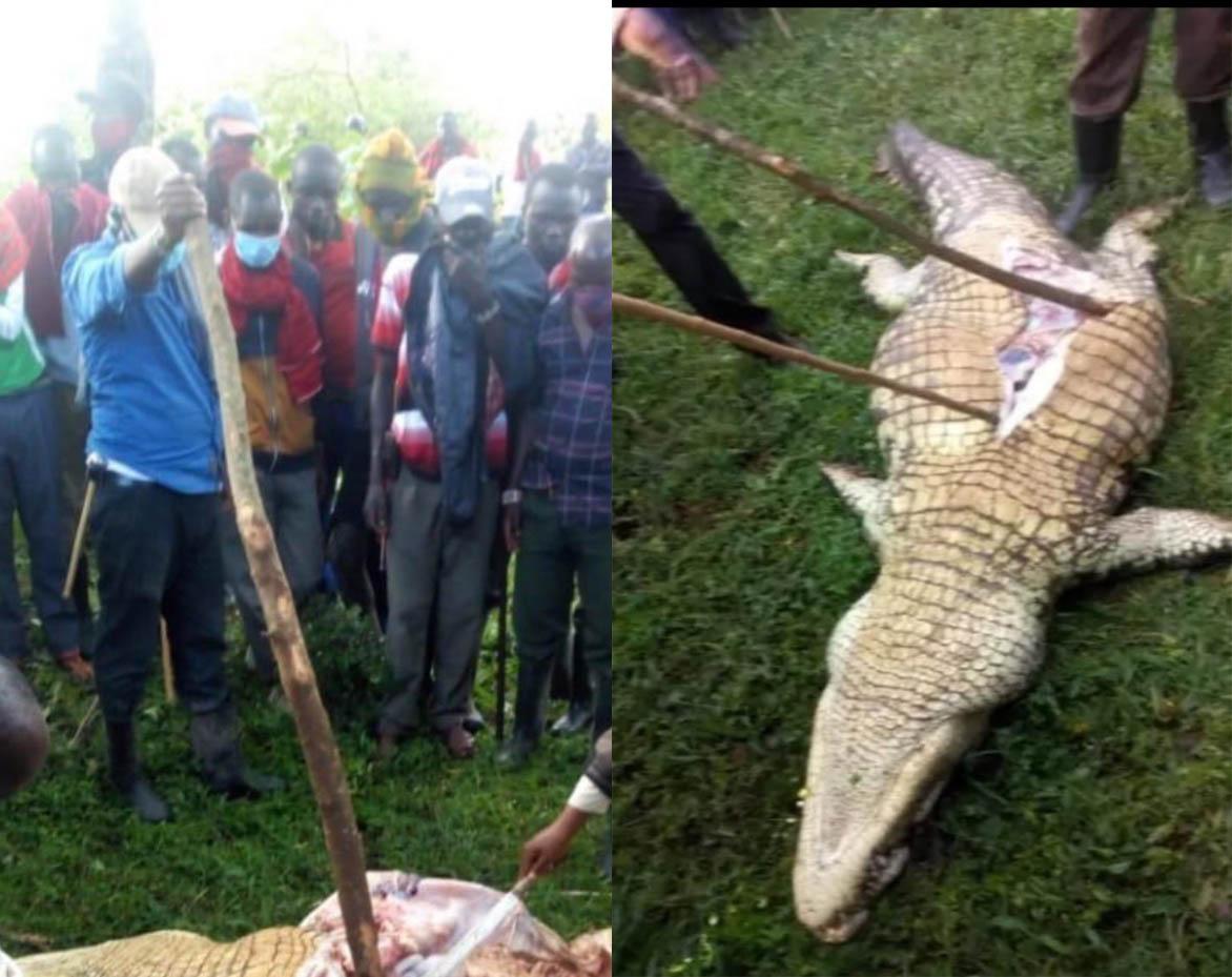 """Cá sấu tấn công cậu bé, dân làng lùng giết rồi mổ bụng """"đòi"""" xác - 1"""