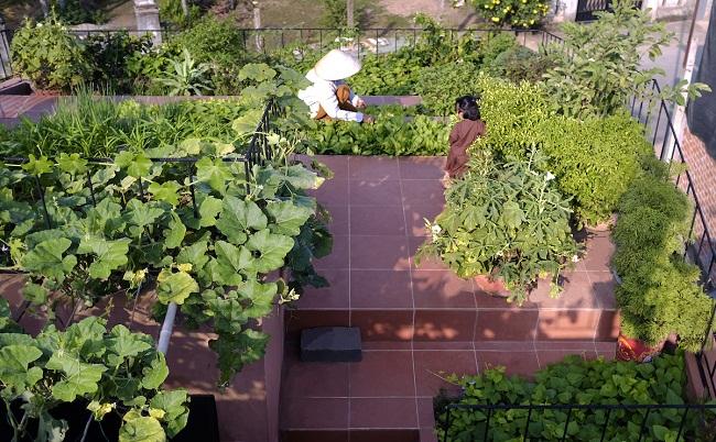 """Nhà """"ruộng bậc thang"""" mái phủ kín rau xanh của vợ chồng Việt được báo Mỹ hết lời khen - 3"""