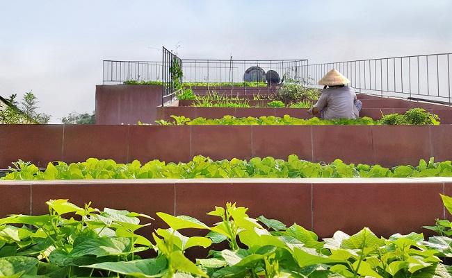"""Nhà """"ruộng bậc thang"""" mái phủ kín rau xanh của vợ chồng Việt được báo Mỹ hết lời khen - 5"""