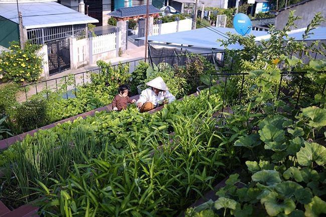 """Nhà """"ruộng bậc thang"""" mái phủ kín rau xanh của vợ chồng Việt được báo Mỹ hết lời khen - 9"""