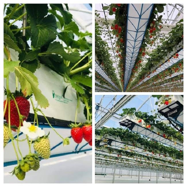 Bỏ việc về quê trồng rau trong nhà, 7x thu hàng tỷ đồng mỗi năm - 5
