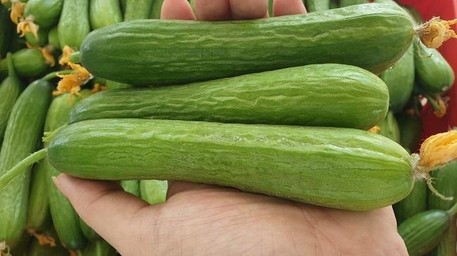 Bỏ việc về quê trồng rau trong nhà, 7x thu hàng tỷ đồng mỗi năm - 3