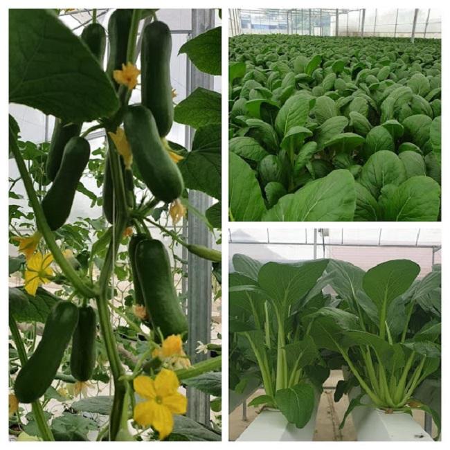 Bỏ việc về quê trồng rau trong nhà, 7x thu hàng tỷ đồng mỗi năm - 2