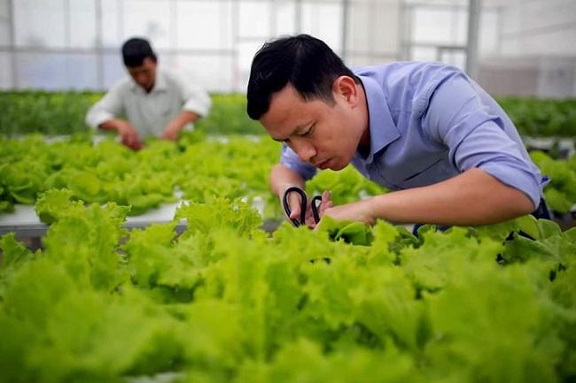 Bỏ việc về quê trồng rau trong nhà, 7x thu hàng tỷ đồng mỗi năm - 6