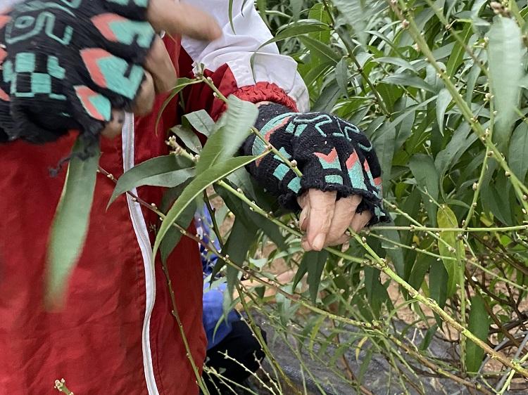 Nông dân trồng đào Nhật Tân chi tiền triệu thuê người tuốt lá đào, tất bật chuẩn bị vụ Tết - 2