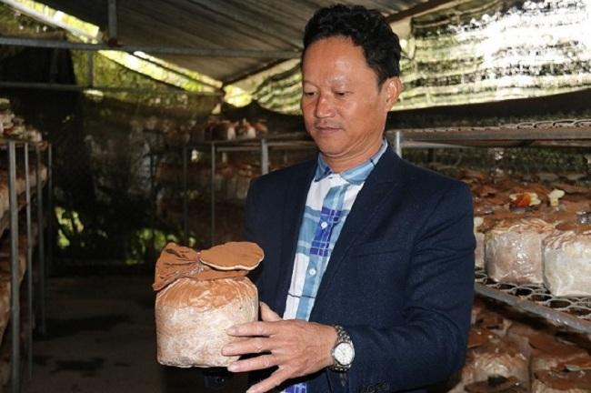Lão nông Hà Tĩnh thu nhập hơn 300 triệu/năm nhờ trồng loại cây bổ dưỡng này - 3