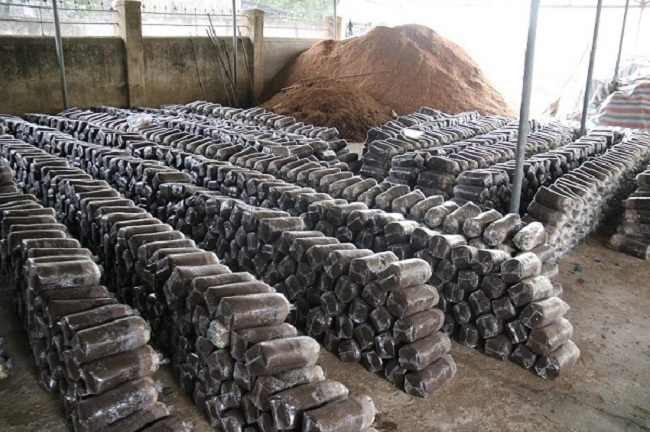 Lão nông Hà Tĩnh thu nhập hơn 300 triệu/năm nhờ trồng loại cây bổ dưỡng này - 2