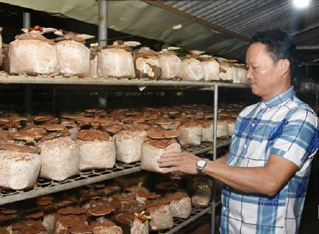 Lão nông Hà Tĩnh thu nhập hơn 300 triệu/năm nhờ trồng loại cây bổ dưỡng này - 1