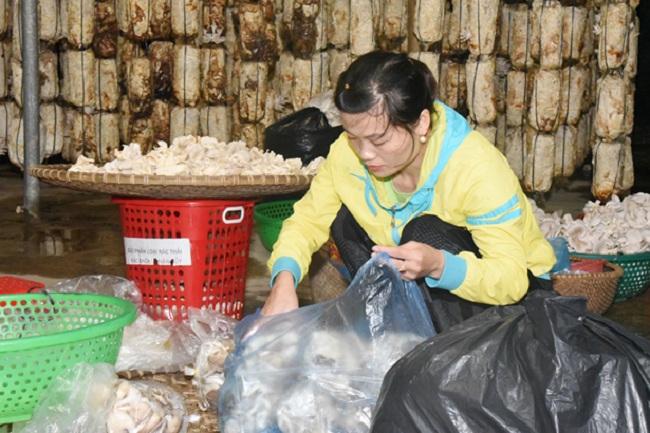 Lão nông Hà Tĩnh thu nhập hơn 300 triệu/năm nhờ trồng loại cây bổ dưỡng này - 6