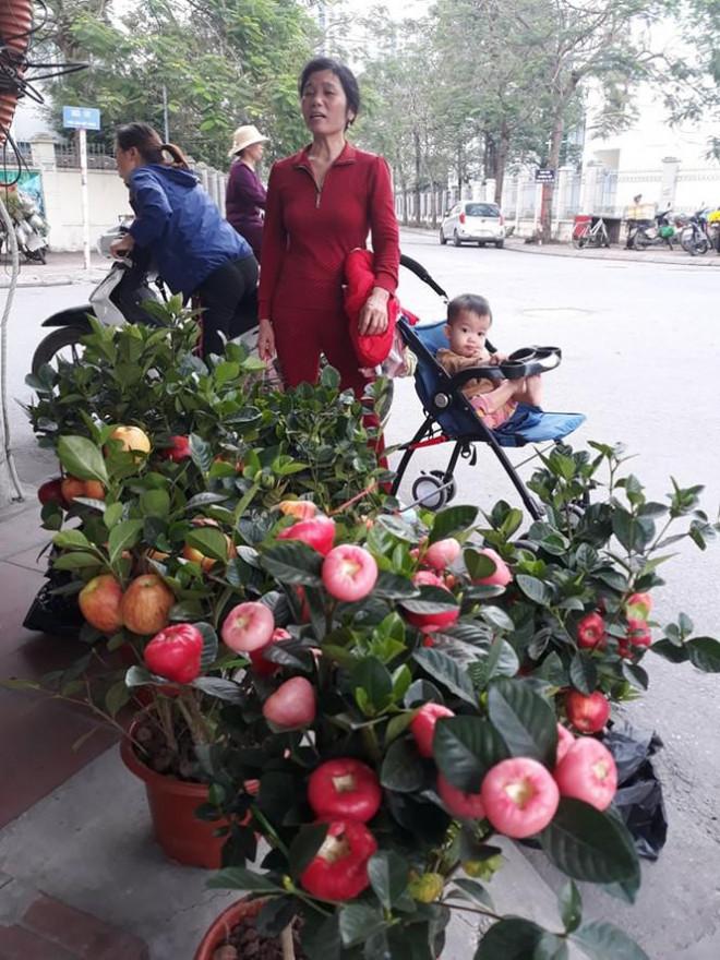 """Bắp cải Trung Quốc màu lạ giá """"chát"""" thành cây trang trí ngày Tết - 4"""