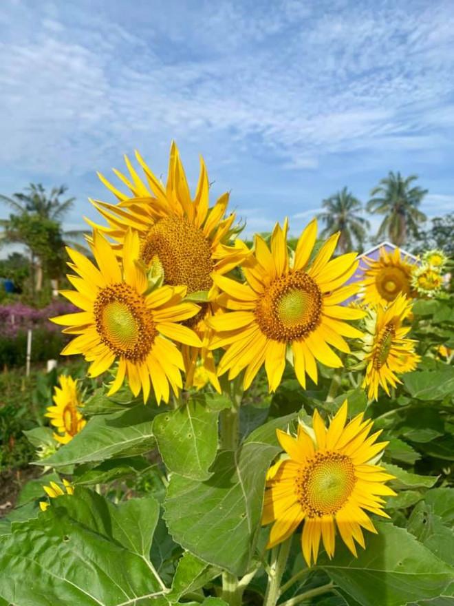 """Địa điểm check-in Tết Dương lịch 2021: """"Vườn hoa Đà Lạt"""" giữa lòng Sài Gòn hút giới trẻ - 8"""