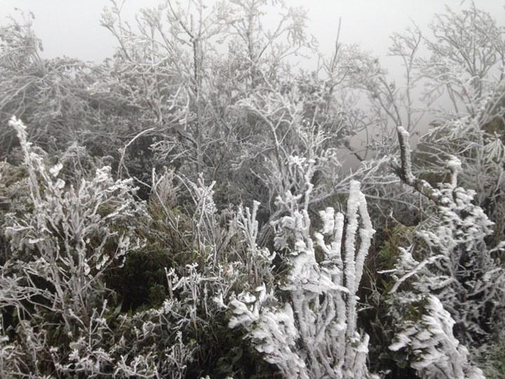 Đỉnh Mẫu Sơn xuống 1 độ C, nhiều nơi ở miền Bắc chìm trong giá rét - hình ảnh 1