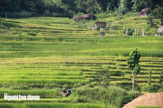 Vẻ đẹp mê mẩn mùa vàng ở Pù Luông - Sa Pa của xứ Thanh - 3