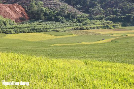 Vẻ đẹp mê mẩn mùa vàng ở Pù Luông - Sa Pa của xứ Thanh - 8