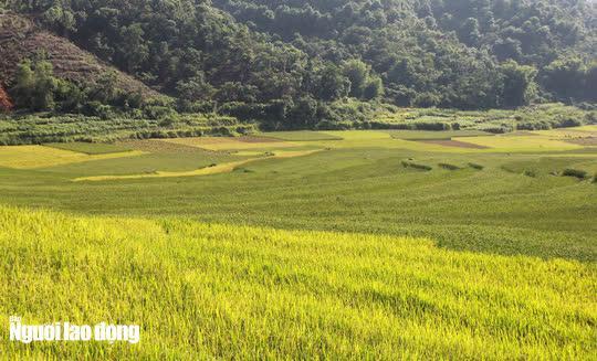 Vẻ đẹp mê mẩn mùa vàng ở Pù Luông - Sa Pa của xứ Thanh - 7