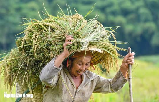 Vẻ đẹp mê mẩn mùa vàng ở Pù Luông - Sa Pa của xứ Thanh - 16