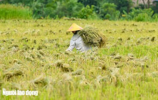 Vẻ đẹp mê mẩn mùa vàng ở Pù Luông - Sa Pa của xứ Thanh - 14